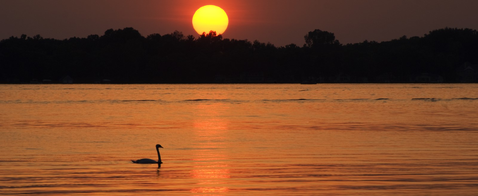 a bird swimming on a lake with the sunsetting